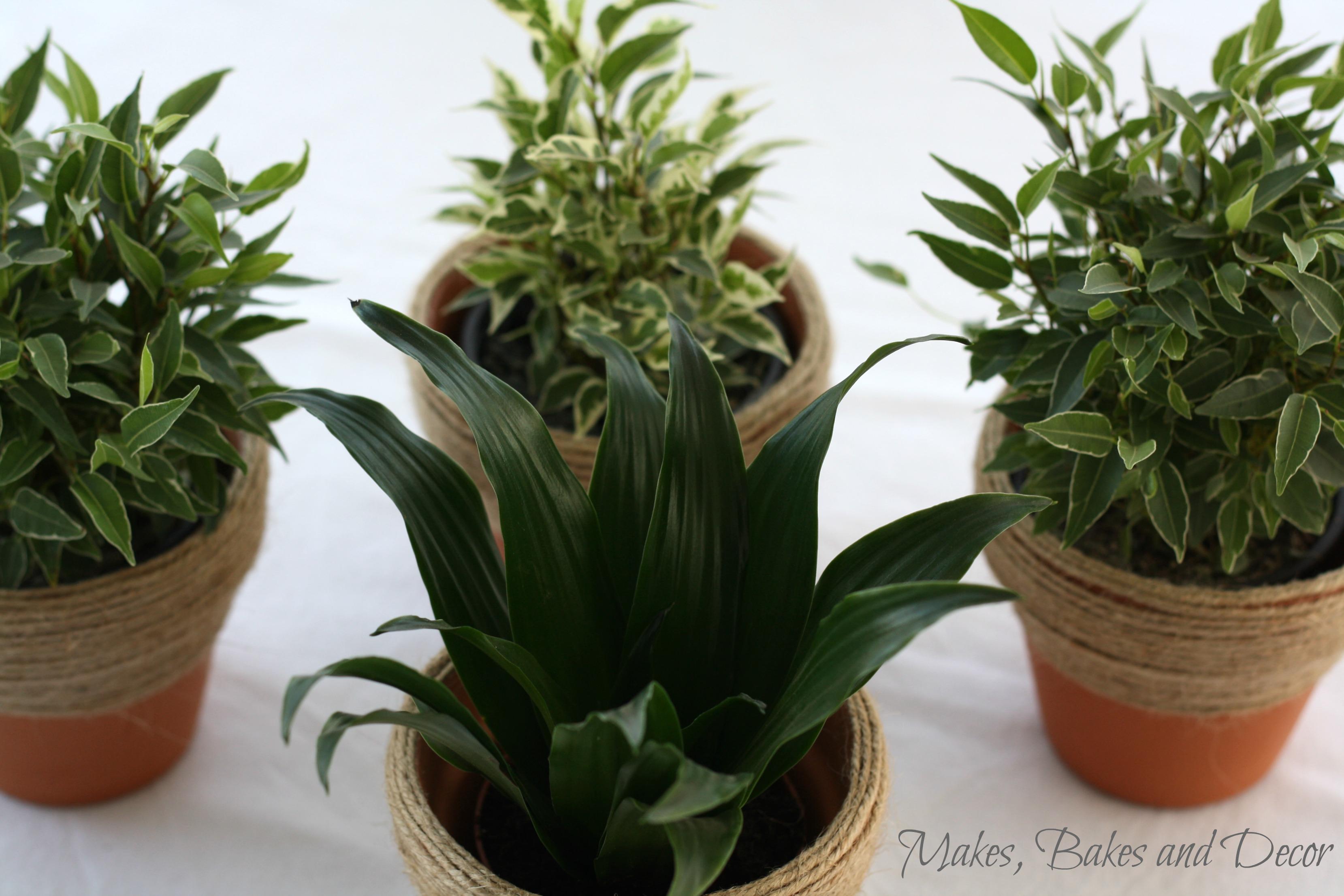 twine wrapped plant pots